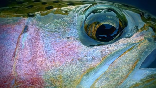 Trout Creek Outfitters, TCO Fishing Report May 28th 2021
