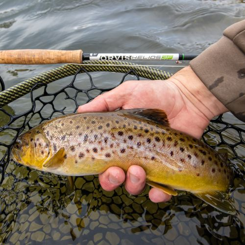 Trout Creek Outfitters, TCO Fishing Report 1/16/21