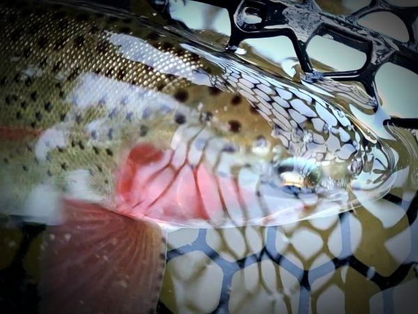 Trout Creek Outfitters, TCO Fishing Report 11/19/20