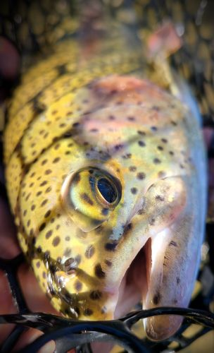 Trout Creek Outfitters, TCO Fishing Report 11/3/20