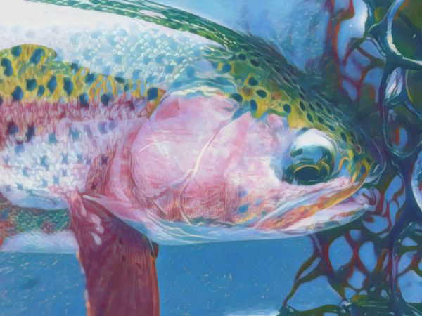 Trout Creek Outfitters, TCO Fishing report 10/7/20