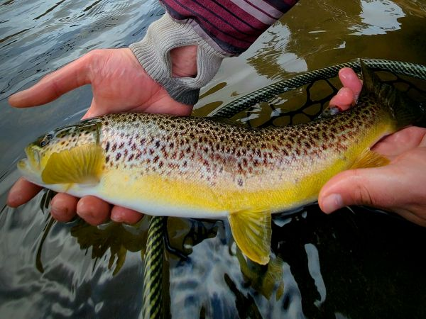 Trout Creek Outfitters, TCO Fishing Report 2/12/21