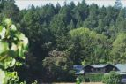 Village Market & Meats, Thursday Wine Tastings