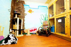 Truckee-Tahoe Pet Lodge, Luxury Cat Boarding