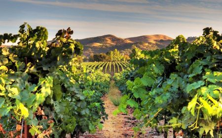 The Grille at The Chateau, Valentine's Wine Dinner Featuring Wente Vineyards
