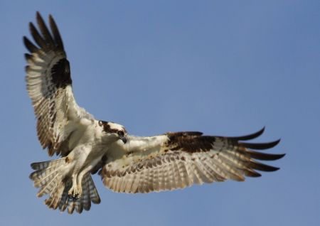 South Lake Tahoe Library, Tahoe Big Year Birding Recap