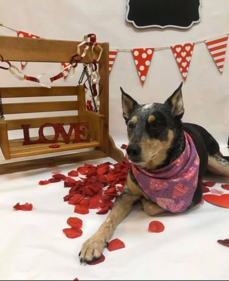 Truckee-Tahoe Pet Lodge, Valentine's Day Pawty