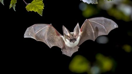 South Lake Tahoe Library, Bat Week Celebrated at SLT Library