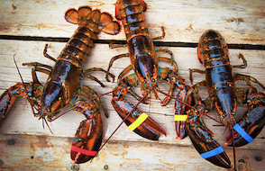 The Lodge Restaurant & Pub, Live Maine Lobster Specials