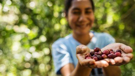 Bare Roots Artisan Coffee Roasting Co., Timor Este - Fresh Roasted Coffee Beans