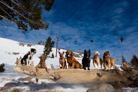 Gallery Keoki, Squaw Dogs